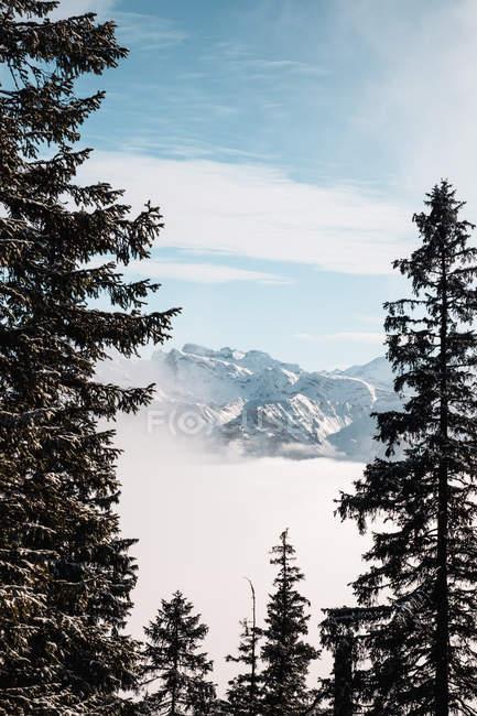 Beau paysage avec des montagnes couvertes de neige et des pins — Photo de stock
