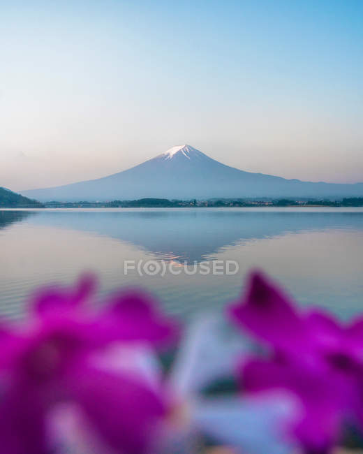 Amazing landscape with snow-covered mountain at morning, purple flowers on foreground, selective focus — Stock Photo