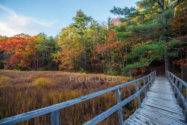 Holzspannweite zu schönem Wald mit grünen, roten und gelben Bäumen im Herbst — Stockfoto
