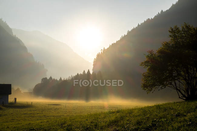 Beautiful green meadow and trees on mountains during sunrise — стокове фото