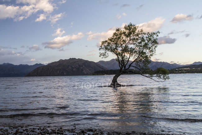 Beautiful natural view of tilted tree during flood and mountains on horizon — стоковое фото