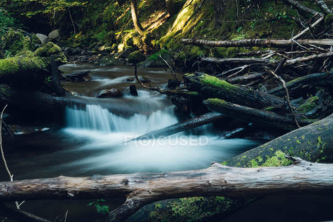 Beautiful natural view of rapid river, fallen trees and green moss — Stock Photo