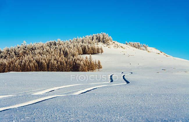 Трек размещены на снегу и красивые деревья на холме в солнечный зимний день — стоковое фото