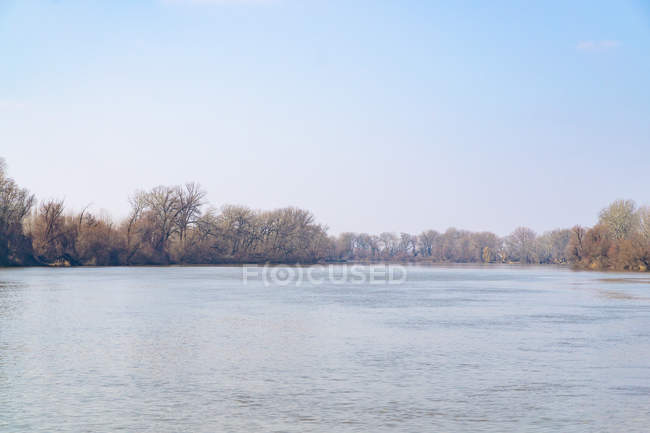 Trees on shore and rippled lake water at sunny day — стоковое фото