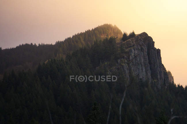 Beautiful green vegetation on rocky mountains at sunrise — Stockfoto