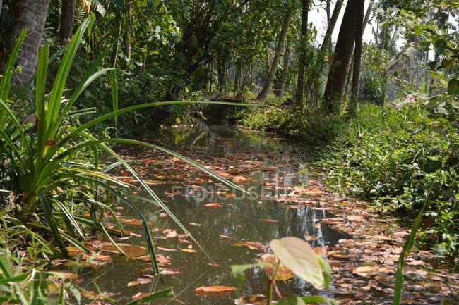 Alberi verdi e piccolo laghetto calmo nella foresta di mangrovie — Foto stock