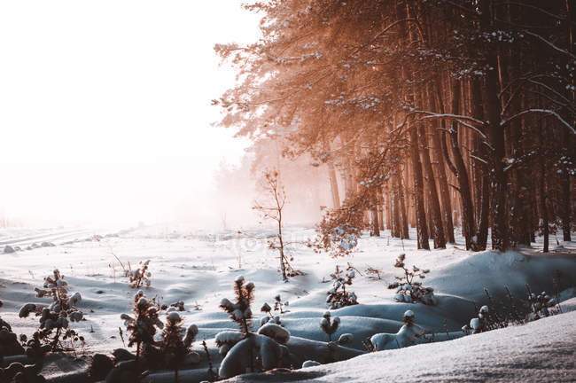 Beautiful landscape with snow-covered trees in snow region — Stock Photo