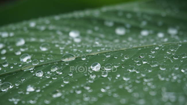 Close-up view of water drops on fresh green leaf, selective focus — Photo de stock