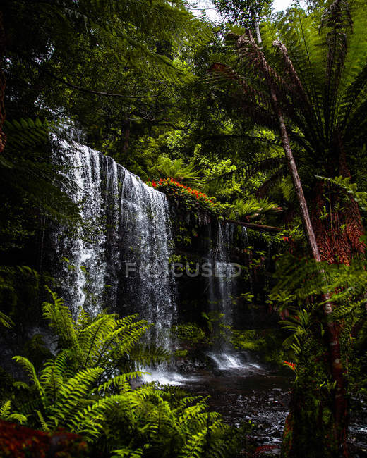 Amazing landscape with beautiful waterfall in green tropical forest - foto de stock