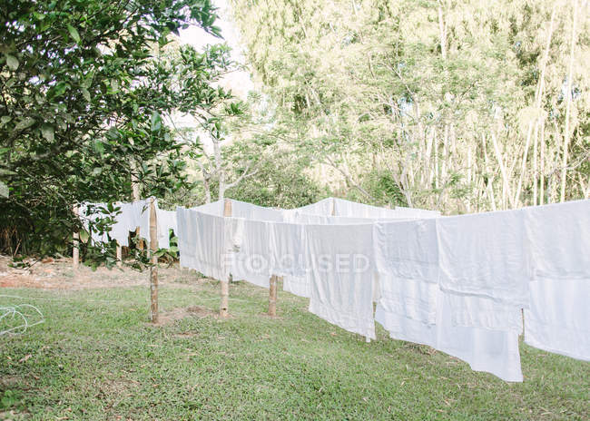 White clothes hanging on ropes in garden during daytime — Stock Photo