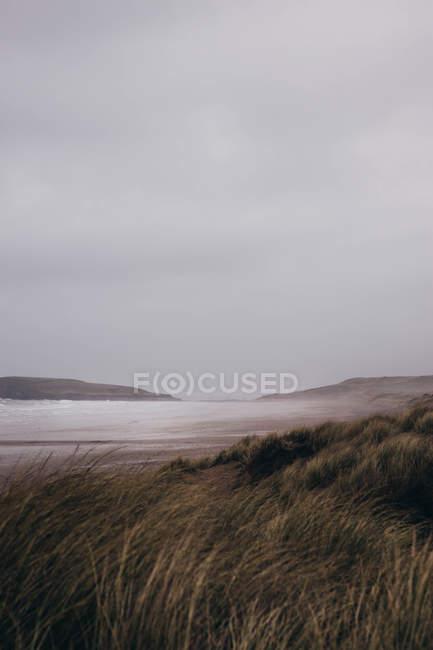 Paisagem bonita com grama alta no vento e no céu nebuloso — Fotografia de Stock
