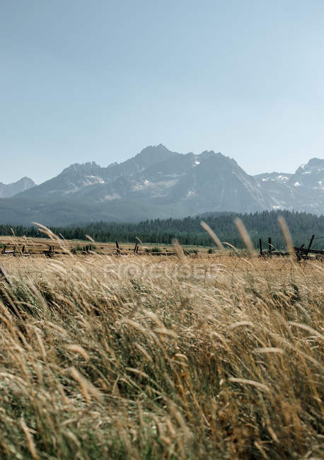 Grass growing on meadow near beautiful mountains at sunny day — Stock Photo