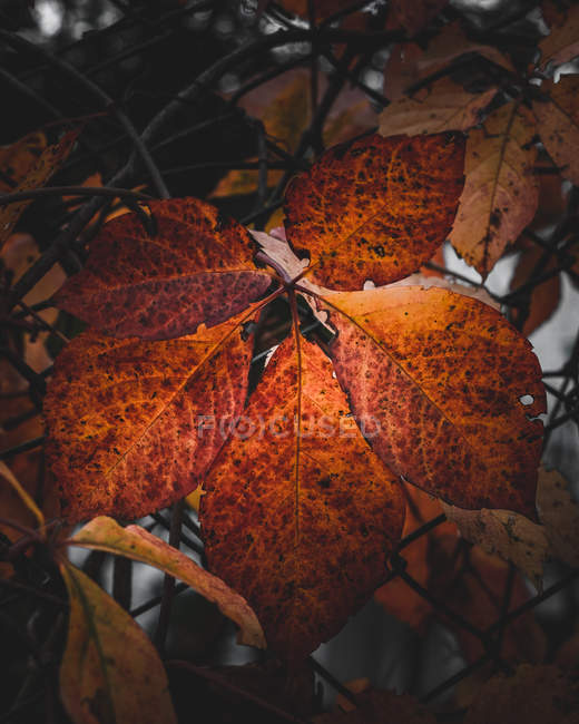 Close-up view of autumn withered brown leaves on fence — Photo de stock