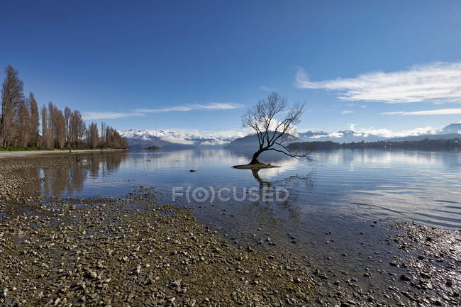 Amazing natural view with bare tree in lake and scenic mountains at sunny day — Foto stock