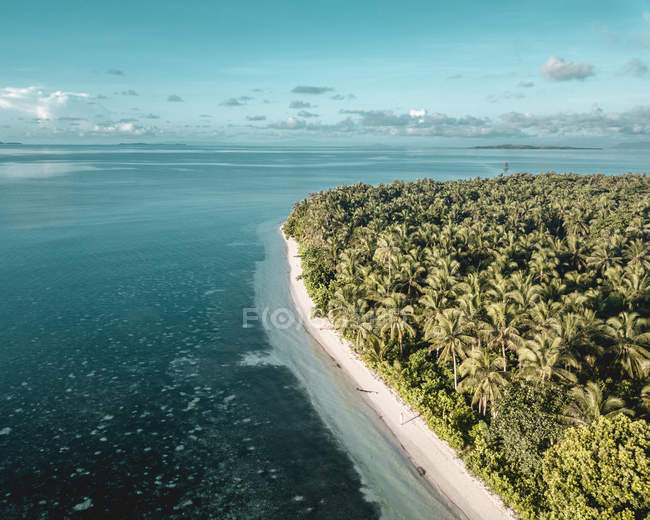 Aerial view of island with green palm trees and sea — стокове фото