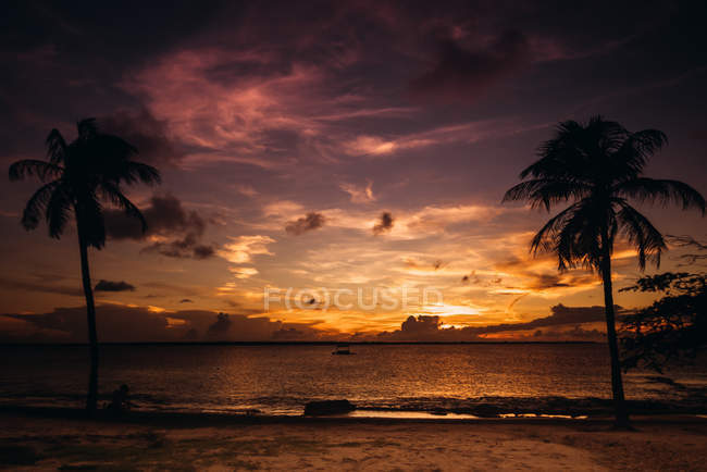 Sandy beach and palm trees at spectacular sunset — стоковое фото