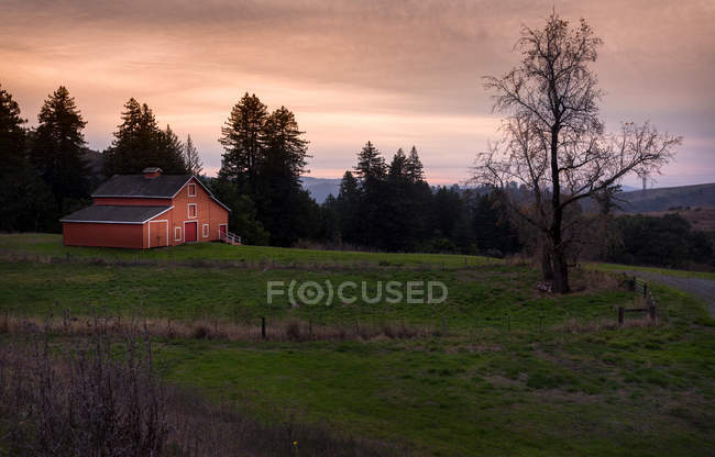 Bard on green field and trees in beautiful mountains at sunset — Photo de stock