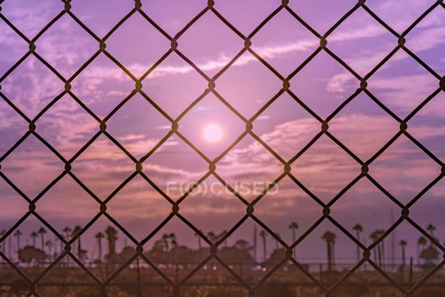 Close-up view of black steel cyclone fence and palm trees on background — Stock Photo