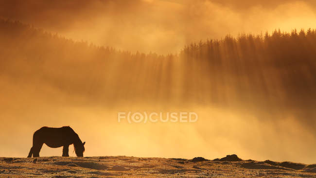 Silhouette of horse grazing on mountain meadow at sunset — стоковое фото
