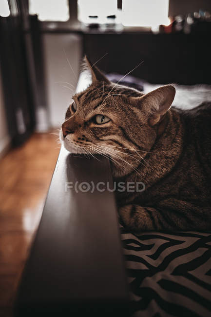 Close-up view of cute brown tabby cat with muzzle resting on a furniture — Fotografia de Stock