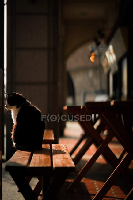 Super Cat Sitting On Wooden Bench By Table Facing Window During Ocoug Best Dining Table And Chair Ideas Images Ocougorg