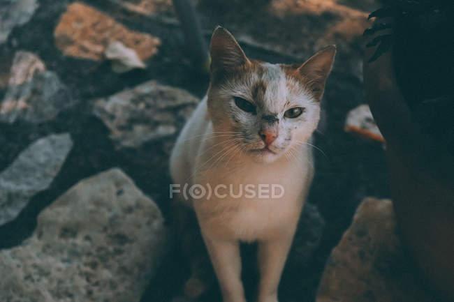 Vista ravvicinata di gatto adorabile seduto su pietre e guardando la fotocamera — Foto stock