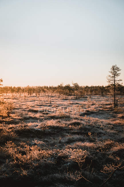 Beautiful landscape with dry grass and trees at winter morning — Foto stock