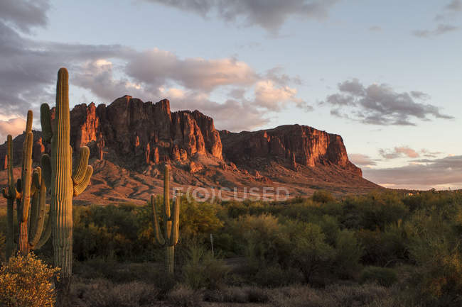 Tranquil landscape with rocky mountains and cactuses at sunset — Photo de stock