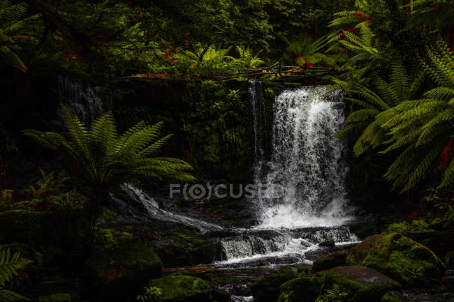 Hermoso paisaje con increíbles cascadas en bosque tropical verde - foto de stock