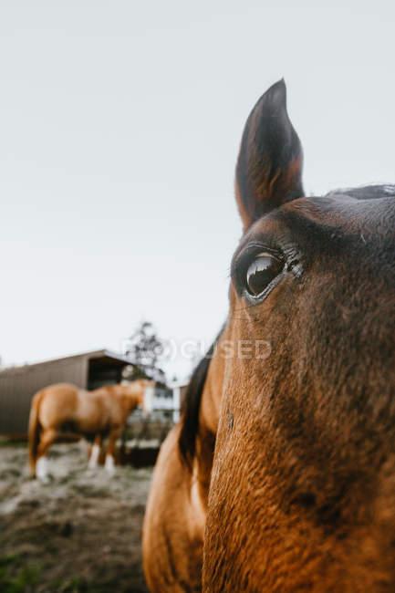 Close-up vista del bel cavallo marrone curioso guardando fotocamera — Foto stock