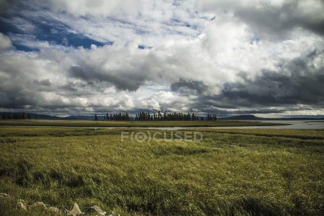 Beautiful landscape with green grass field and trees on horizon under cloudy sky — стокове фото