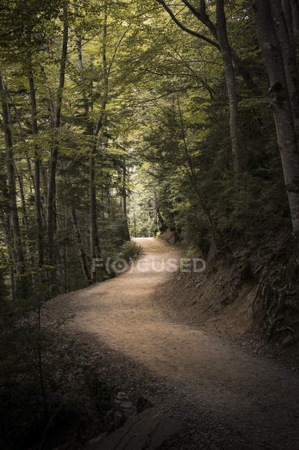 Grey dirt road surrounded by green trees in forest — Fotografia de Stock