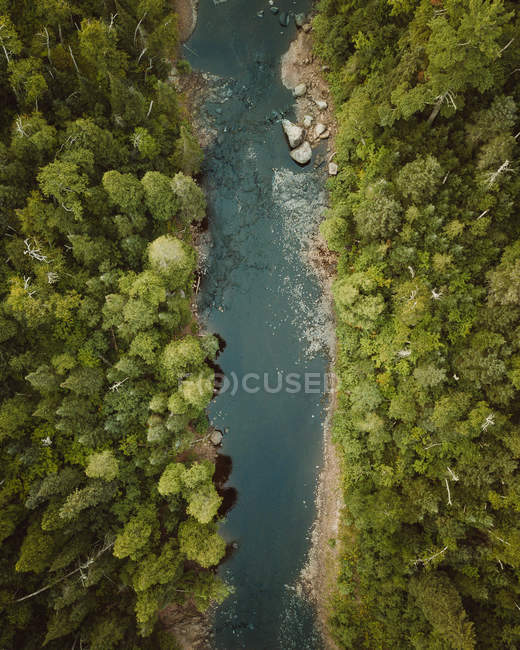 Aerial view of beautiful green trees in forest and rapid river - foto de stock
