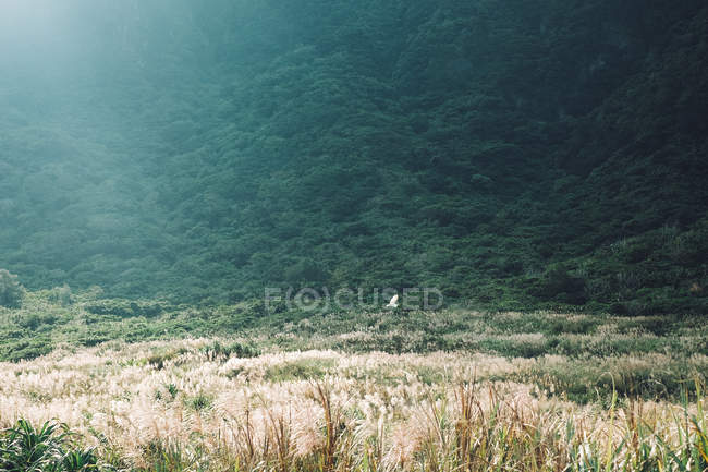 Beautiful landscape with lush green vegetation on mountain slope — Fotografia de Stock