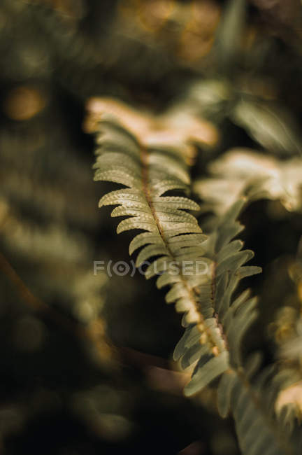Close-up view of greenish fern leaves, selective focus — Foto stock