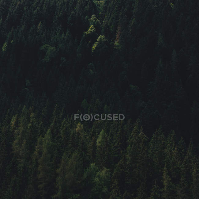 Aerial view of beautiful greenish trees in forest — стокове фото