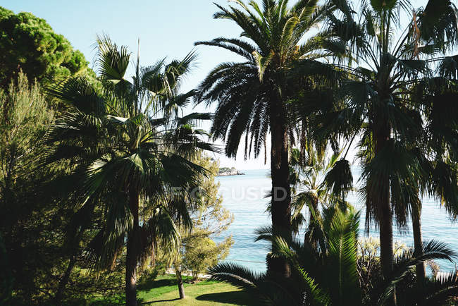 Красивые зеленые пальмы у моря в солнечный день — стоковое фото
