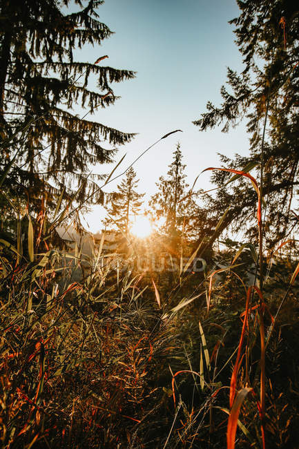 Beautiful landscape with green plants in forest at scenic sunrise — Photo de stock