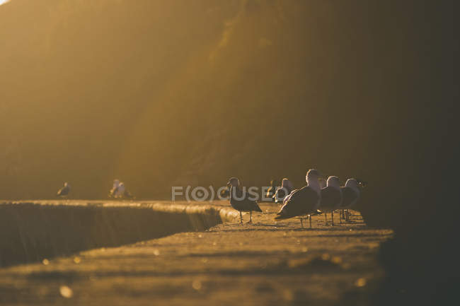 Group of birds on stone wall at sunlight, backlit — стоковое фото
