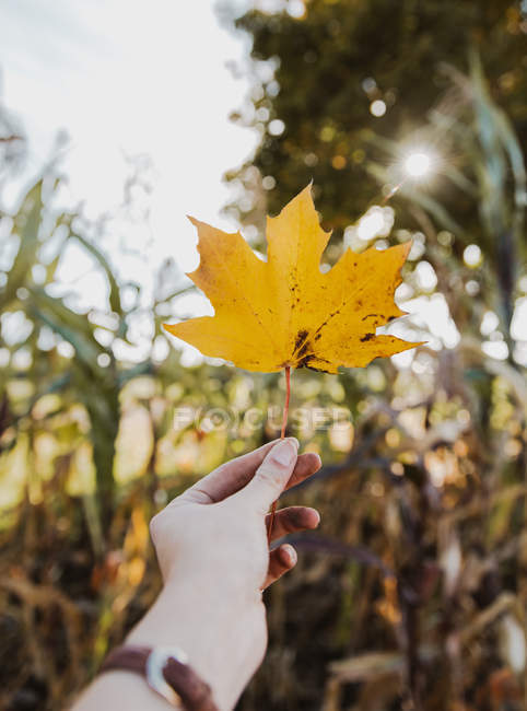 Cropped shot of human hand holding yellow leaf — Stockfoto