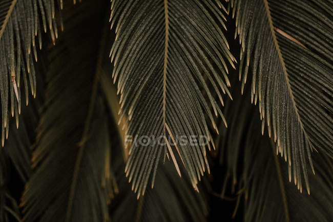 Close-up view of beautiful green leaves hanging on plant, toned image — стокове фото