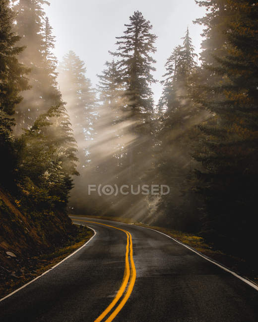 Scenic view of hazy curved empty forest road at sunrise — Photo de stock