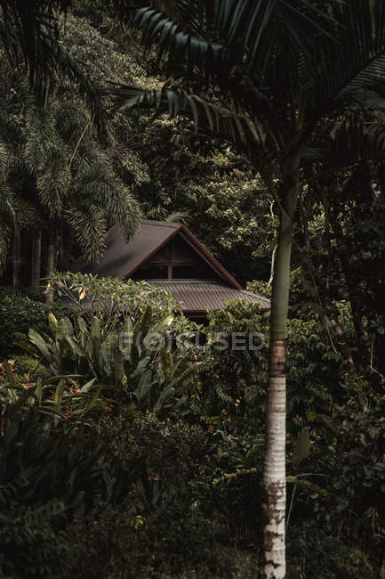 Home hidden by green vegetation in tropical forest — Foto stock