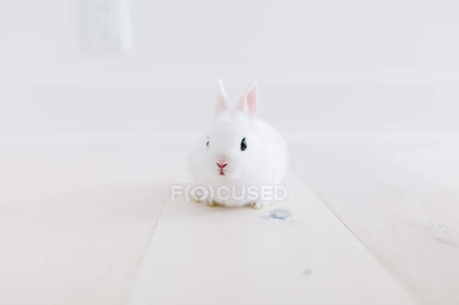 Adorable fluffy white rabbit on grey background — Photo de stock