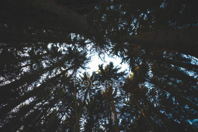 Low-angle photography of trees in beautiful forest during daytime — Photo de stock