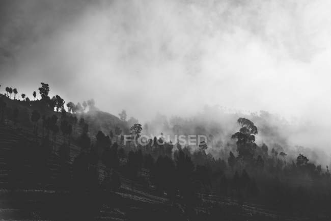 Black and white image of low clouds covered trees on mountains — стокове фото