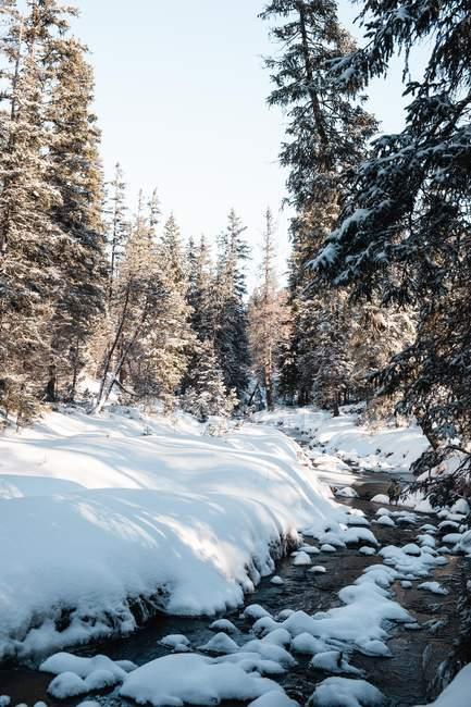 Incredibile vista naturale con acqua di fusione nella foresta invernale — Foto stock