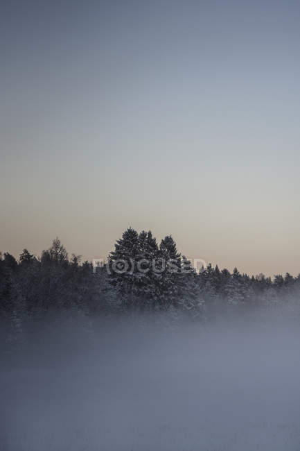 Beautiful natural view with mist covered trees at winter morning — Stock Photo