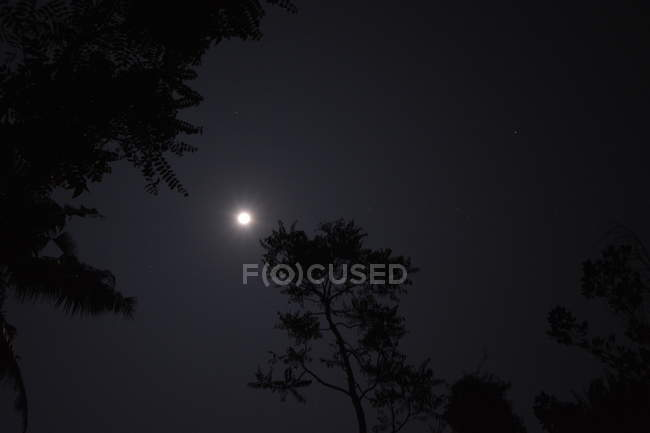Low angle view of trees silhouettes in forest and full moon in night sky — Stock Photo