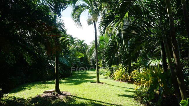 Красивые пальмы и зеленая трава в саду в солнечный день — стоковое фото